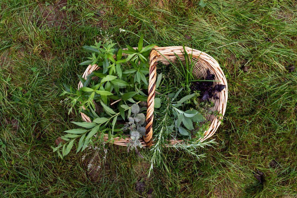 Happy Plantes in Volvic