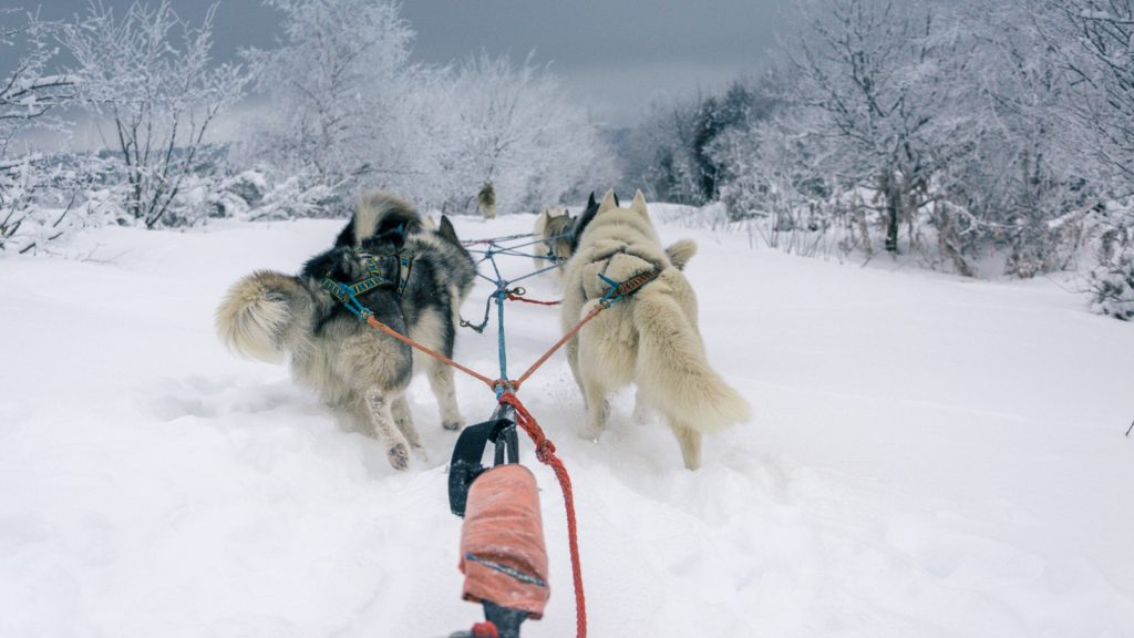 Takamaka_chien_traineau_clermont_ferrand_5_2021