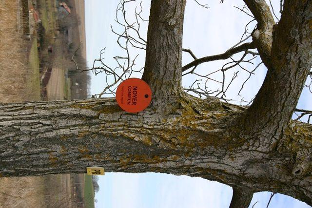 Artonne_Arboretum_CEN Auvergne_RL (1)