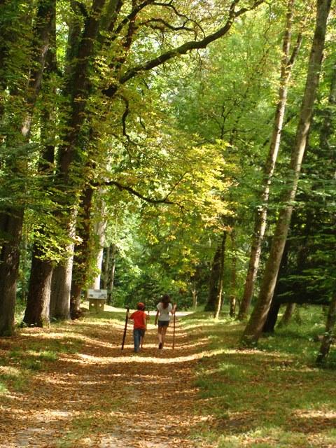 Visite Domaine Royal guide botaniste (36)