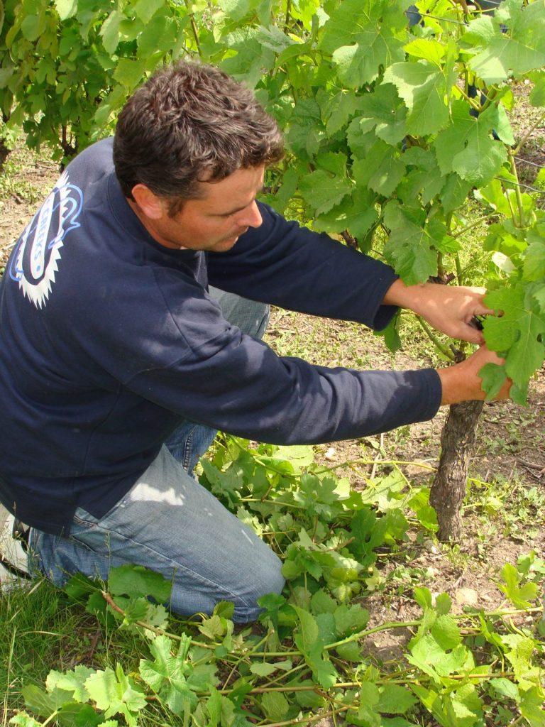 Vin – Cave Benoit Montel à Riom